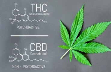 #CBD e THC, le differenze.